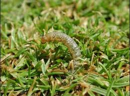 Worm_in_Grass